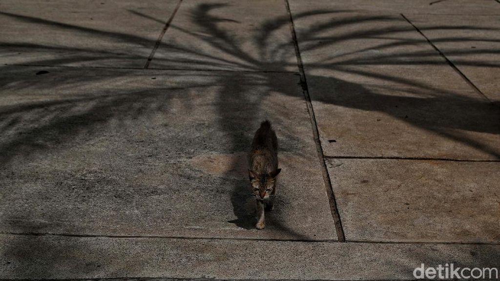 Diduga Kucingnya Mati Diracun, Perempuan di Balikpapan Lapor Polisi