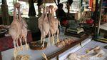 Jelang Akhir Tahun Harga Cabai-Ayam di Bandung Naik