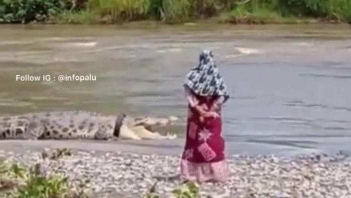 Screenshot video saat warga tampak mendekati buaya berkalung ban yang ada di Sungai Palu, Sulteng (Instagram @infopalu)