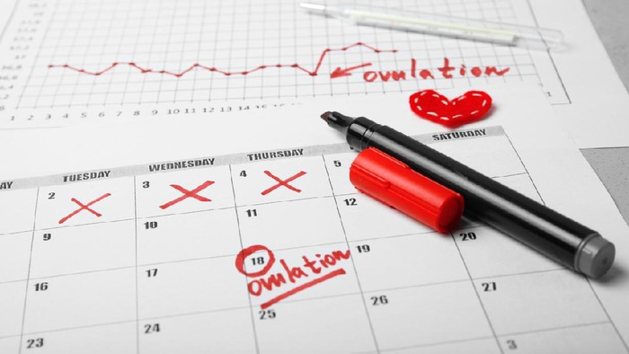 Kalender Menstruasi