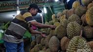 Menikmati Kelezatan Durian Pekanbaru yang Khas