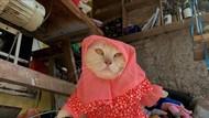 Pasar Busana Kucing di Indonesia, Mulai dari Jilbab Hingga Kostum Lainnya