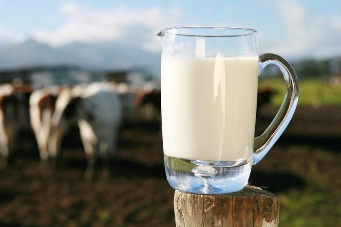 Rasulullah SAW Suka Minum Susu Kambing