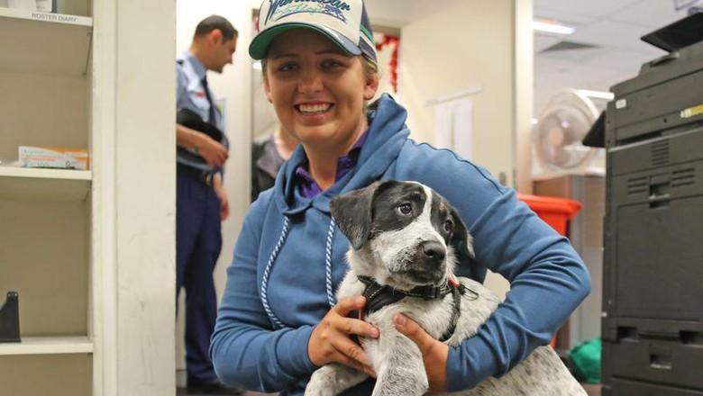 Speck, anak anjing terpisah 480 kilometer dari pemiliknya