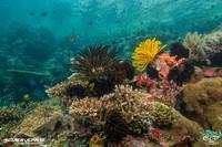 Scuba junkie memiliki resor menyelam di beberapa tempat wisata selam populer yaitu Komodo, Nusa Penida dan Sangalaki, serta lokasi lainnya di Sabah, Malaysia. Mereka sangat senang dianugerahi penghargaan bergengsi tersebut.