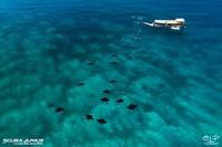 Pasangan Inggris ini mengunjungi Indonesia pada tahun 2005 untuk menyelam di Komodo, ternyata hanya ada 4 perusahaan selam yang beroperasi di tempat tersebut. Mereka langsung jatuh cinta dengan tempat itu dan ingin membuka pusat penyelaman di sana.