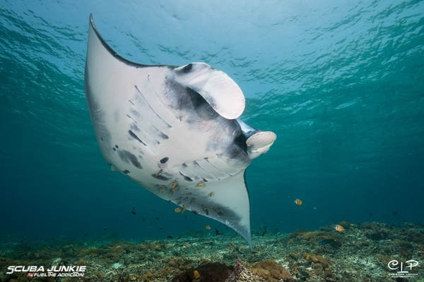 Scuba Junkie juga ingin fokus melindungi ekosistem laut, terutama di Indonesia.