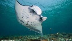 Kisah Pasangan Bule Bangun Pusat Menyelam Terbaik Dunia di Indonesia