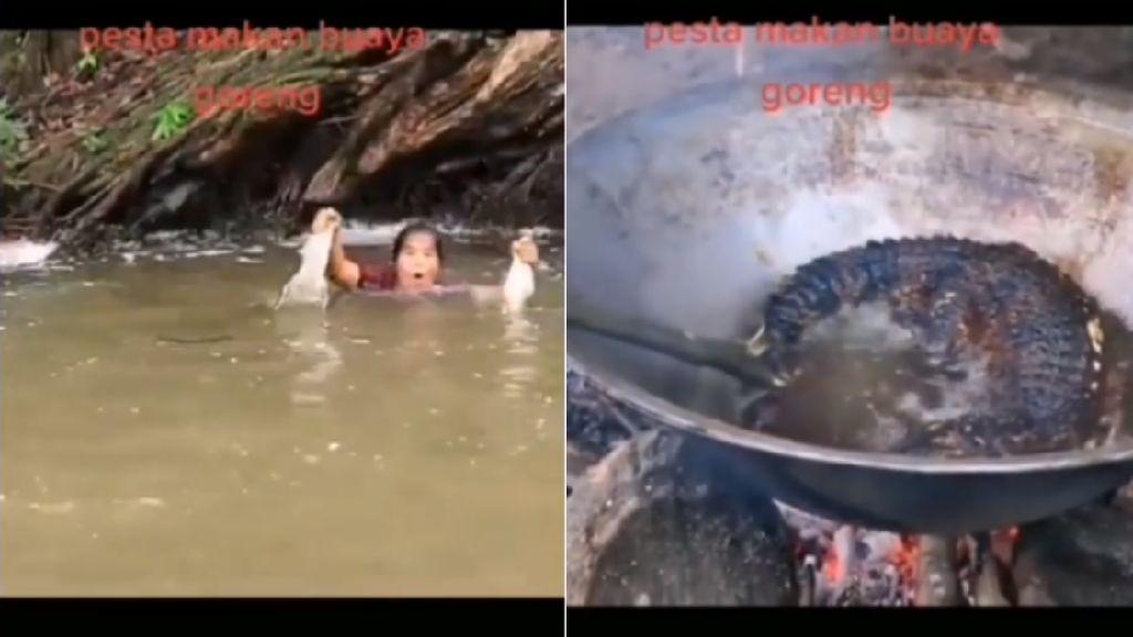 Sangar! Aksi Wanita Berburu Buaya untuk Digoreng dan Dimakan