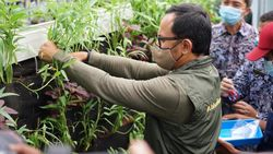 Bangkitkan Ekonomi, Bima Arya Luncurkan Gerakan Bogor Berkebun