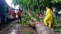 Hujan Disertai Angin di Kudus, Pohon Tumbang Timpa Ruko-Mobil