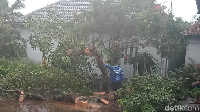 Pohon tumbang di Desa Solodiran, Kecamatan Manisrenggo, Klaten, Sabtu (5/12/2020).