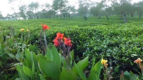 Hamparan keindahan perkebunan di Malang bisa traveler dapat di Kebun Teh Wonosari. Kawasan ini juga kerap menjadi spot instagramable. (Lena Ellitan/dtravelers)