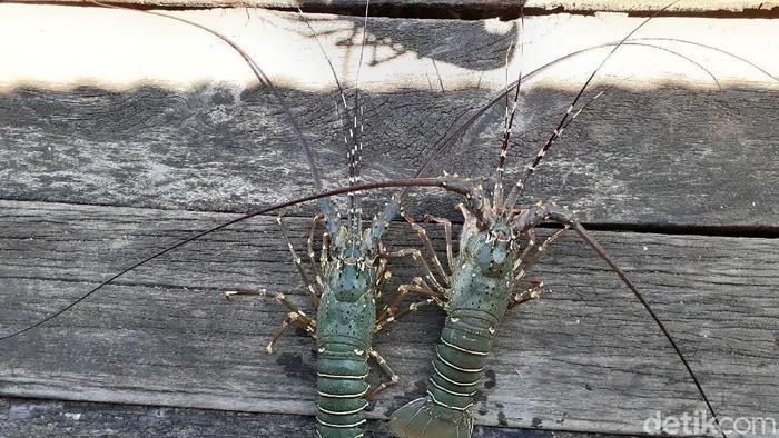 Lobster dan kepiting fak-fak