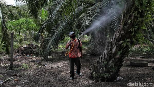 Salah satu alasanyan adalah karena saat itu Rupat masih sepi dengan tanah yang luas sehingga mereka bisa memanfaatkan itu sebagai lahan mencari nafkah seperti menanam sawit, karet dan menjadi nelayan bahkan wirausaha.