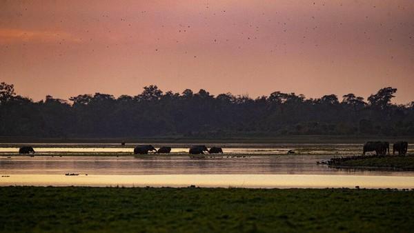 Hamparan luas rumput, rawa, hutan berdaun lebar, silang menyilang dengan empat sungai besar termasuk Sungai Brahmana.