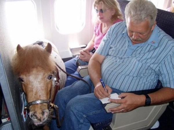 Penumpang ini membawa kuda poni, lo!(Bored Panda)