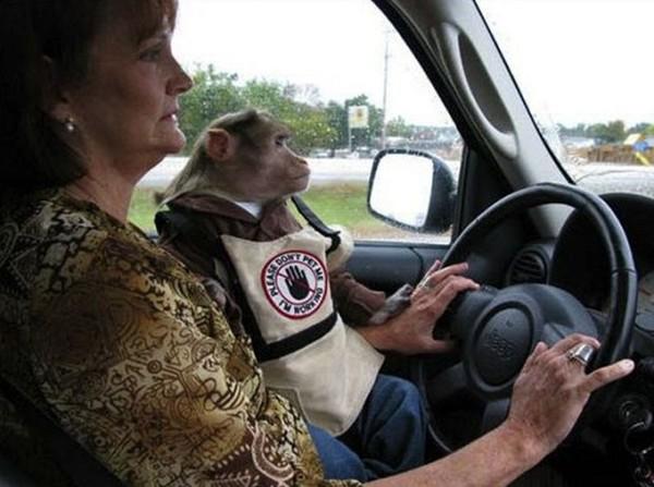 Waktu itu ada penumpang yang menderita agrophobia dan animal support-nya adalah monyet. (Bored Panda)
