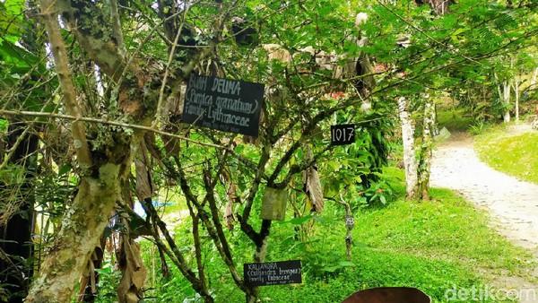 Taman Eden 100 memiliki ratusan tanaman khas yang berkhasiat. Lokasinya berada di Samosir, Sumatra Utara (Tasya Khairally/detikcom)