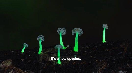Jamur Glow in The Dark