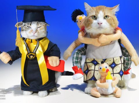 Baju kucing produksi Fani Nuryanto