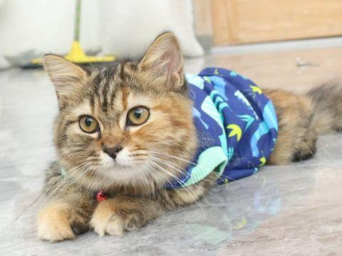 Koleksi baju kucing milik Baju Kucing Tangerang