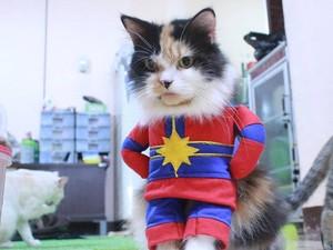 Kisah Ibu Rumah Tangga Raup Omzet Jutaan dari Bisnis Baju Kucing