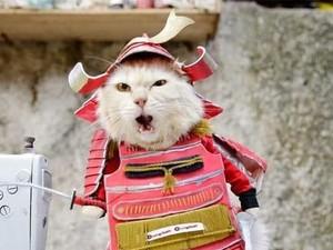 Liputan Khusus: Bisnis Baju untuk Kucing Raup Omzet Hingga Puluhan Juta