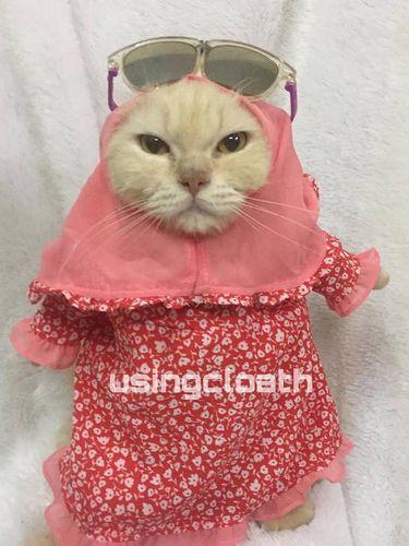 Koleksi baju kucing milik Fredi Lugina