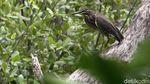 Mengintip Suaka Burung-burung di Ibu Kota