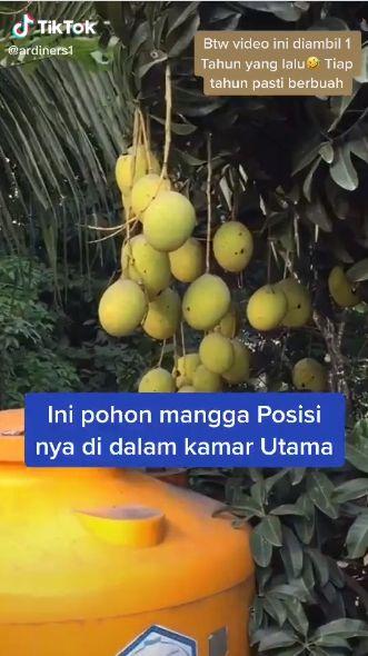 Pohon Nangka dan Mangga Tumbuh dalam Rumah, Netizen: Kuntilanak Bisa Ngerujak