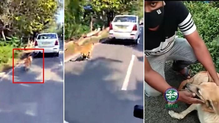 Anjing diseret mobil