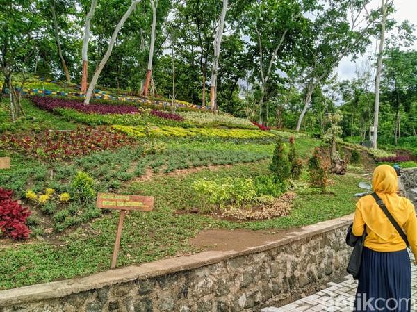 Saat ini sedang ada proses pembangunan monumen bukit Soeharto. Berbagai tanaman hias dan bunga tampak mengisi lereng bukit yang semakin indah.