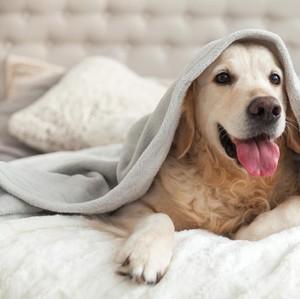 Jangan Salah! Begini Cara Tentukan Porsi Makanan Ideal untuk Anjing