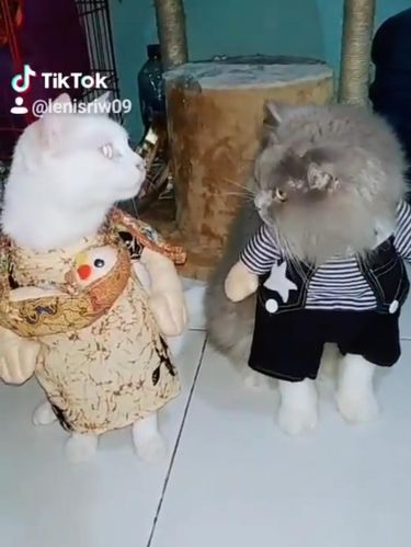 Koleksi baju kucing Lenny