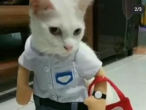 Ketika Kucing Punya Koleksi Baju yang Tak Kalah Banyak dari Tuannya