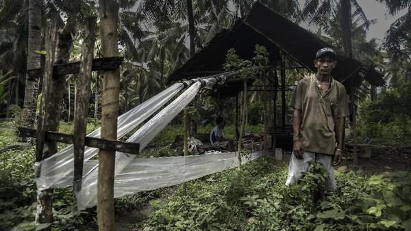 Di bawah bayang-bayang dedaunan pohon kelapa seorang pria berkalung salib logam mengamati tetes cairan hasil sulingan nira di perkebunan kelapa Desa Nuruwe, Kecamatan Kairatu Barat, Kabupaten Seram Bagian Barat, Provinsi Maluku.