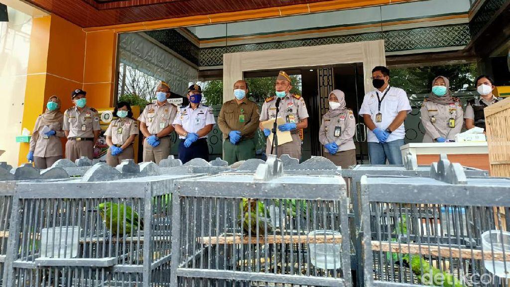 259 Burung Tanpa Dokumen dari Balikpapan Diamankan di Surabaya