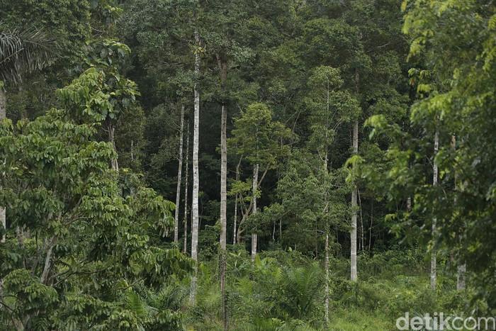 Kawasan hutan lindung yang menyimpan beragam flora langka, menjadi objek wisata favorit di perbatasan Indonesia-Malaysia. Seperti saat akan menuju PLBN Aruk, Sambas, Kalbar, sepanjang jalan disisi kanan maupun kiri disuguhi oleh panorama keindahan kawasan hutan tropis maupun perbukitan.