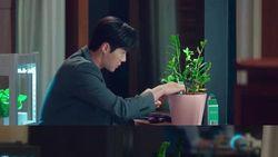 Mengenal Jade Plant, Tanaman Hias Pembawa Hoki di Drakor Start-Up