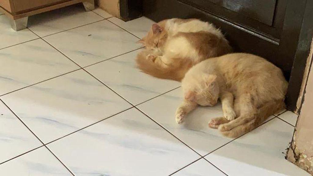 Polisi Akan Cek TKP 6 Kucing Warga Balikpapan Diduga Mati Diracun