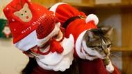 Gemas! Kucing di Kafe Seoul Ini Diubah Jadi Santa Klaus