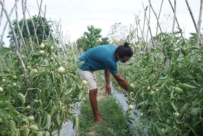 petani perbatasan