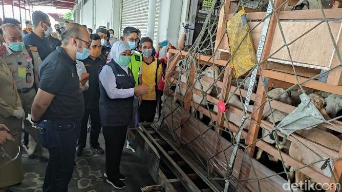 Sebanyak 1.301 ekor domba senilai Rp 2,2 milliar di ekspor ke Brunei Darussalam . Ekspor perdana ini dilakukan oleh Balai Besar Karantina Pertanian (BBKP) Surabaya.