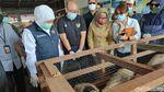 Foto: 1301 Ekor Domba Rp 2,2 Miliar Diekspor ke Brunei Darussalam