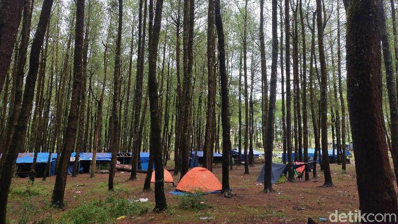 camping ground hutan pinus Lembanna