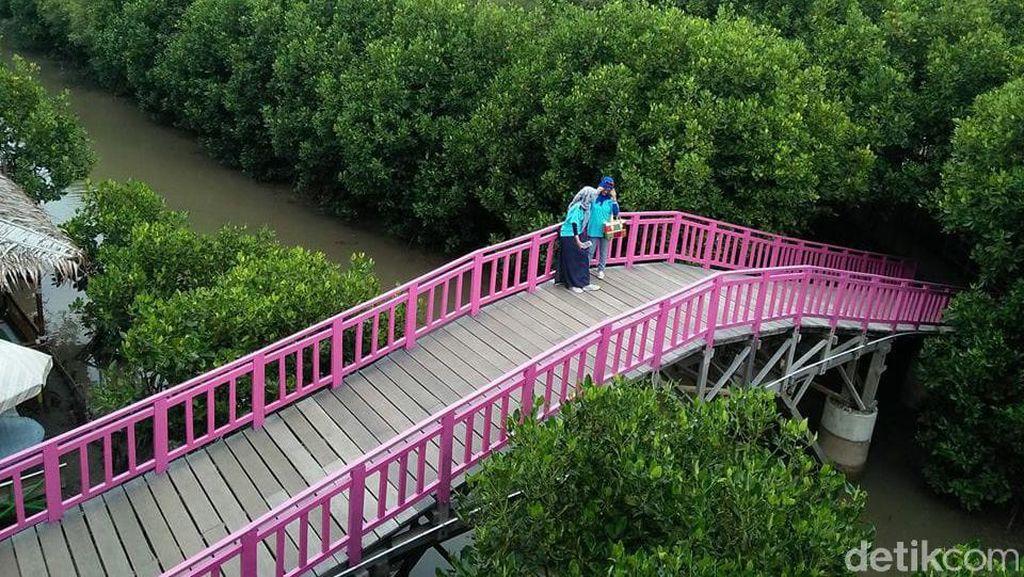 Percepatan Rehabilitasi Mangrove