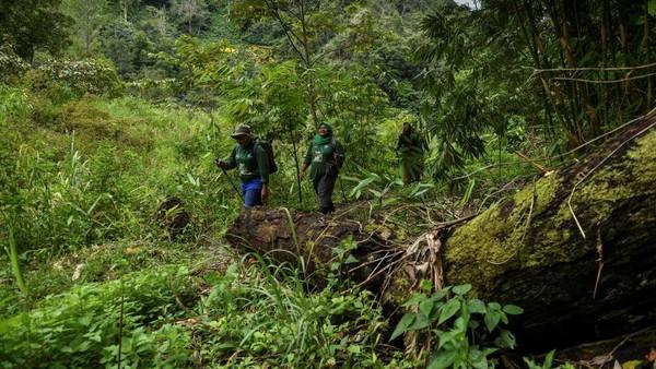 Mereka bertugas untuk menjaga ekosistem seperti hewan dan pohon di hutan tersebut.