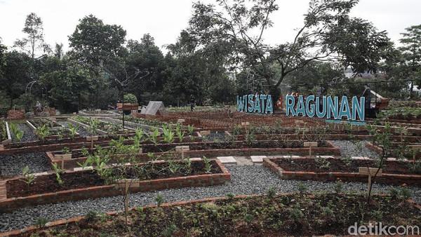 Tempat ini menjadi tempat pusat edukasi percontohan pertanian perkotaan.