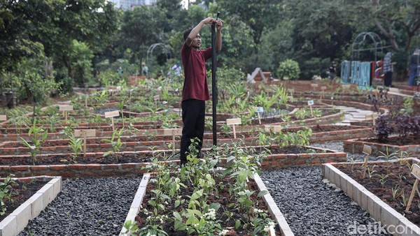 Agro Edukasi Wisata Ragunan juga untuk mengakomodir tingginya minat warga Ibu Kota dalam bercocok tanam di masa pandemi COVID-19.